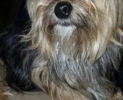 Photo #6: Pet Care (Safe at Home Pet Sitting)