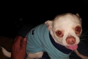Photo #5: Pet Care (Safe at Home Pet Sitting)