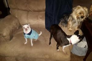 Photo #4: Pet Care (Safe at Home Pet Sitting)
