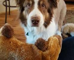 Photo #3: Pet Care (Safe at Home Pet Sitting)