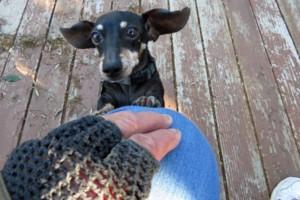 Photo #2: Pet Care (Safe at Home Pet Sitting)