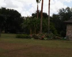 Photo #3: Palms & trees trim, remove... 15 yrs of experience
