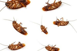 Photo #1: Pest Control $65