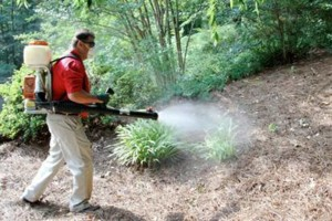 Photo #1: CERTIFIED pest control $50