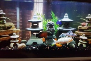 Photo #16: Freshwater aquarium services