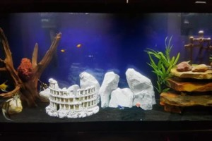 Photo #15: Freshwater aquarium services