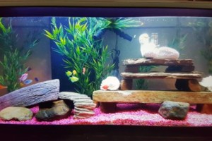 Photo #14: Freshwater aquarium services
