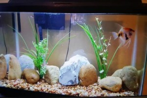Photo #13: Freshwater aquarium services