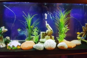 Photo #12: Freshwater aquarium services