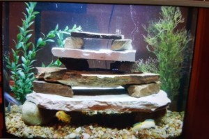 Photo #11: Freshwater aquarium services