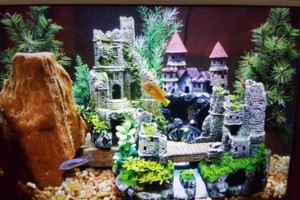 Photo #10: Freshwater aquarium services
