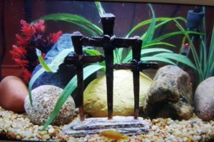 Photo #9: Freshwater aquarium services