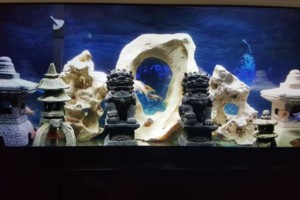 Photo #7: Freshwater aquarium services