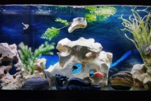 Photo #5: Freshwater aquarium services