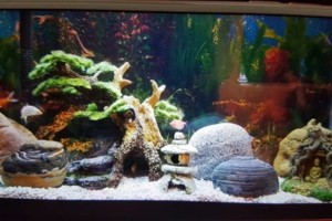 Photo #2: Freshwater aquarium services