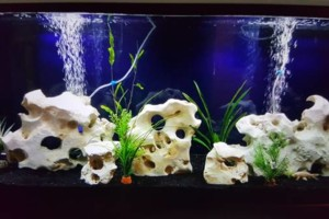 Photo #1: Freshwater aquarium services