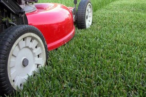 Photo #1: Lawn Cutting Services only $25!!