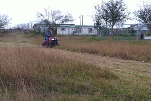 Photo #1: Andamos / Basic touch lawn care service