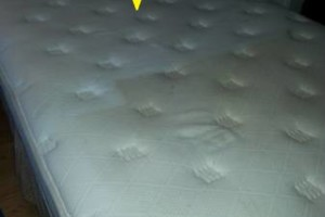 Photo #3: Carpet Cleaning / Upholstery by HydraTech Carpet & Disaster Services
