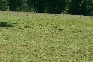 Photo #4: Dalmation lawn service/ we don't miss a spot