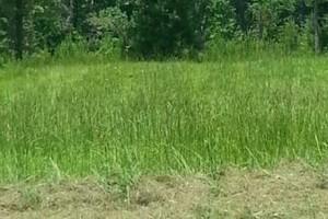 Photo #3: Dalmation lawn service/ we don't miss a spot