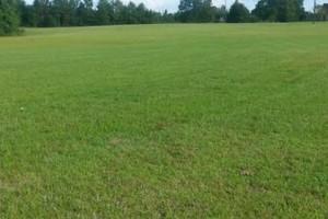 Photo #1: Dalmation lawn service/ we don't miss a spot