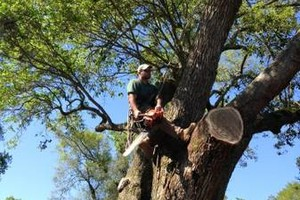 Photo #2: Tree Climber for hire