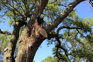 Photo #1: Tree Climber for hire