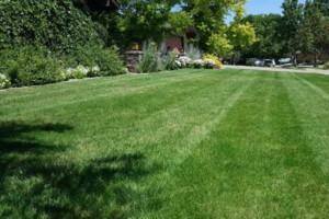 Photo #1: NoBull Lawn Care Services