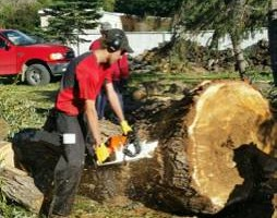 Photo #1: James' Tree Service