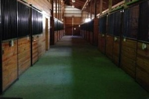 Photo #4: HORSE STALLS FOR RENT $250 (TRAINERS WANTED)