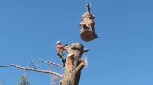 Photo #2: Affordable Quality Tree Work