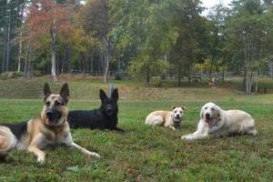 Photo #1: Animal Alternatives - PET SITTING, WALKING, TRAINING