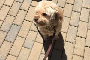 Photo #11: Animal Alternatives - PET SITTING, WALKING, TRAINING