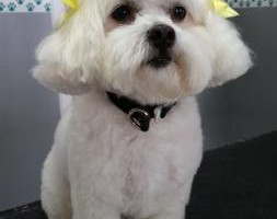 Photo #1: Pampered Pup Salon - Dog Grooming!