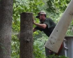 Photo #1: On The Grind Stump Removal and Tree Service