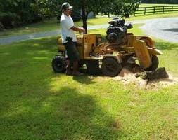 Photo #1: MAYANS PROFESSIONAL TREE SERVICE