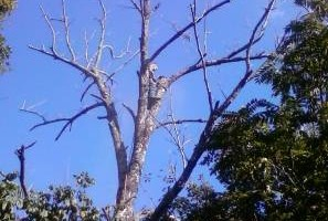 Photo #1: TnT Tree Services