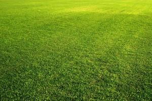 Photo #1: Guitreau's lawn care