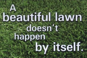 Photo #2: Expert lawn services