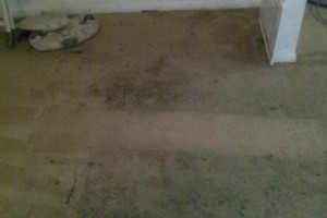 Photo #1: Carpet Steam Cleaned