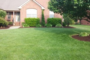 Photo #3: Deep Creek Services Landscaping