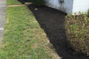 Photo #3: Need bushes trim? Hedge trimming? Mulch?