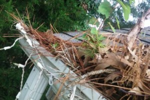 Photo #5: Gutter Clean-Out/ Debris Removal