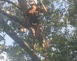 Photo #2: ALL in one tree service