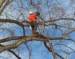 Photo #1: ALL in one tree service