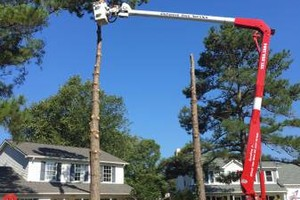 Photo #2: DeForest Tree Service