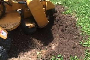 Photo #1: Stump grinding services