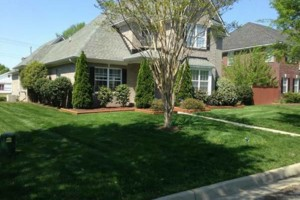 Photo #4: Best Priced Quality Pro Lawn Care