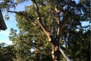 Photo #1: Tree climber VA beach
